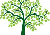 210x150 Clip Art Tree Of Life Clip Art
