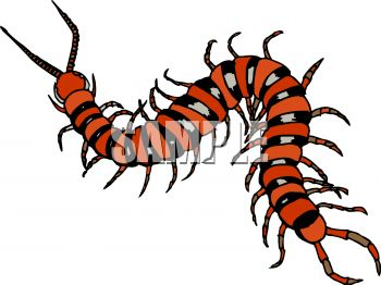 350x262 Royalty Free Clipart Image Centipede Or Millipede Insect