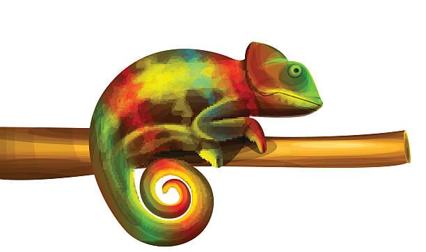 612x362 Chameleon Clipart Vector