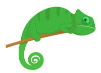 200x146 Reptiles Chameleon Clipart Clipart