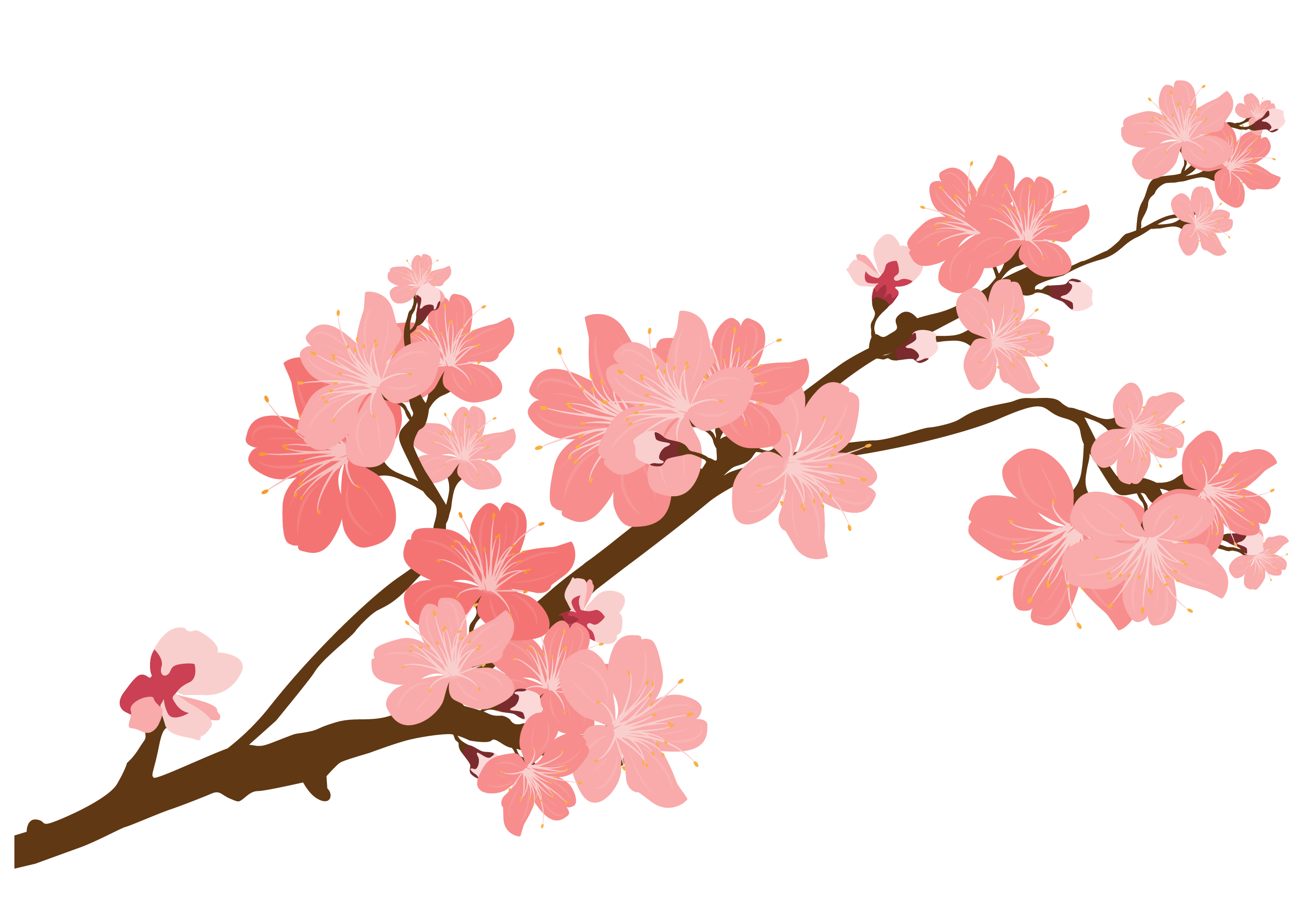 2631x1860 Cherry Blossom Sticker Clip Art