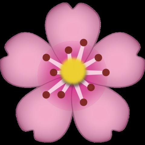 480x480 Download Cherry Blossom Emoji Icon Emoji Island