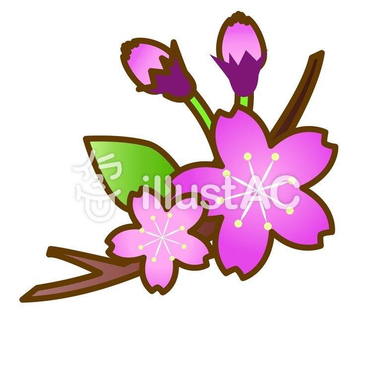 750x750 Free Cliparts Cherry Blossoms, Sakura, Petal