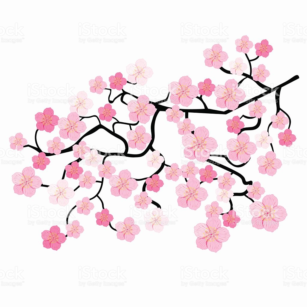 1024x1024 Pictures Japanese Cherry Blossom Clip Art,