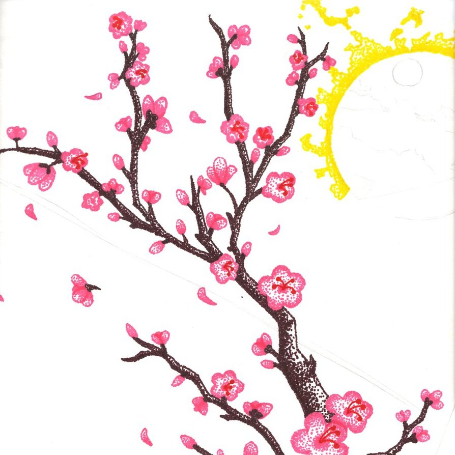894x894 Cherry Blossom Drawing Cartoon Cherry Blossom Tree Free Download