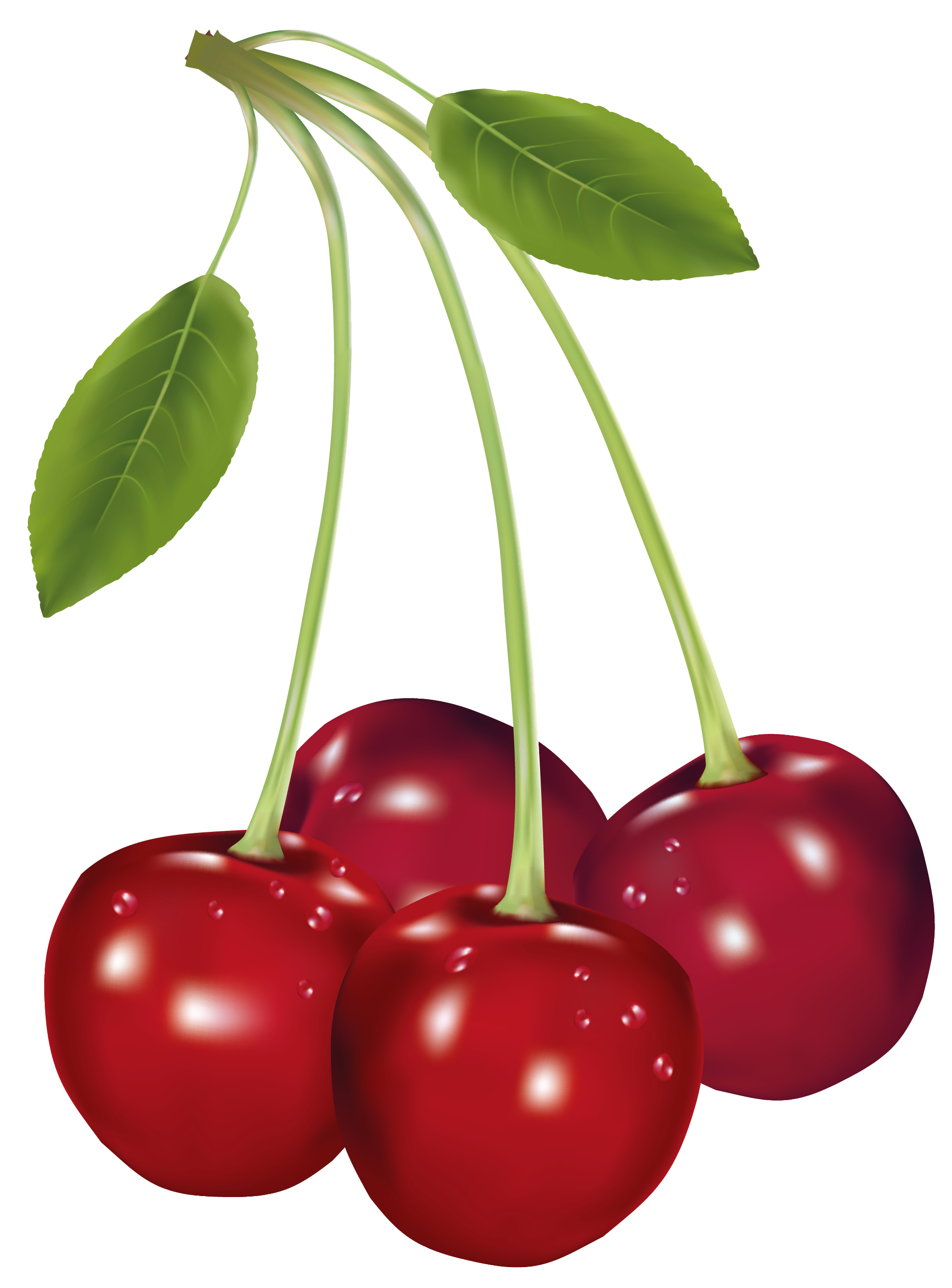 1916x2592 Cherries Png Clipart Pictureu200b Gallery Yopriceville
