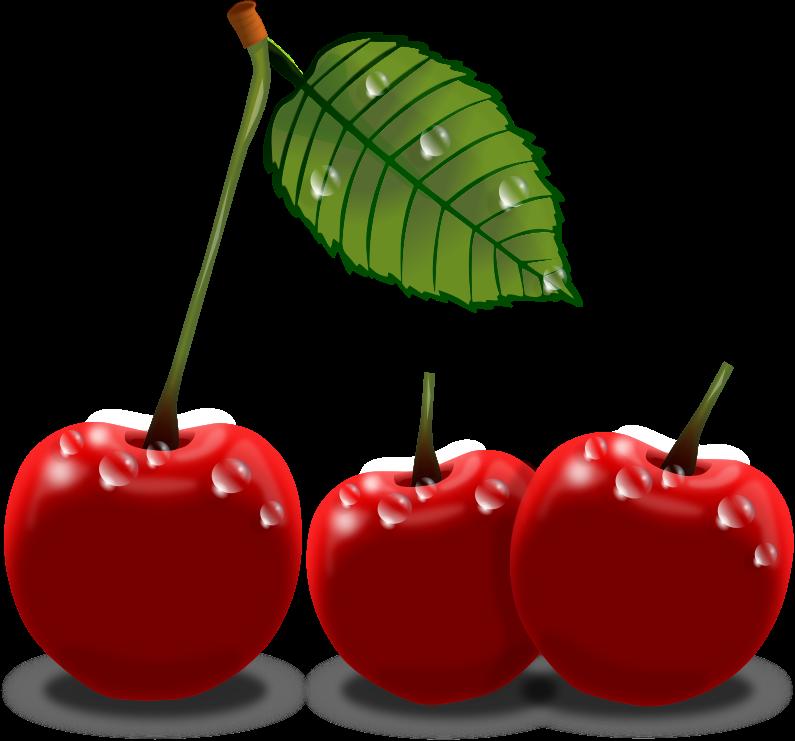 795x741 Cherry Plants Clip Art Image