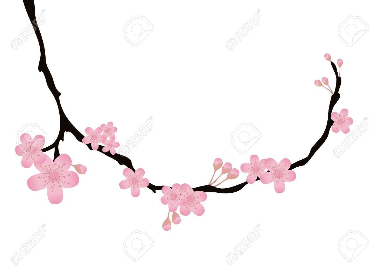 1300x920 Clip Art Cherry Blossoms Clip Art