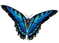 236x171 Cherub Butterfly Clipart Amp Cherub Butterfly Clip Art Images