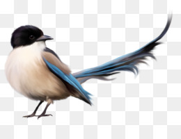 260x200 Chickadee Png And Psd Free Download