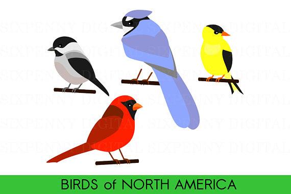 570x380 Cute Bird Clipart Birds Of North America Cardinal Clipart