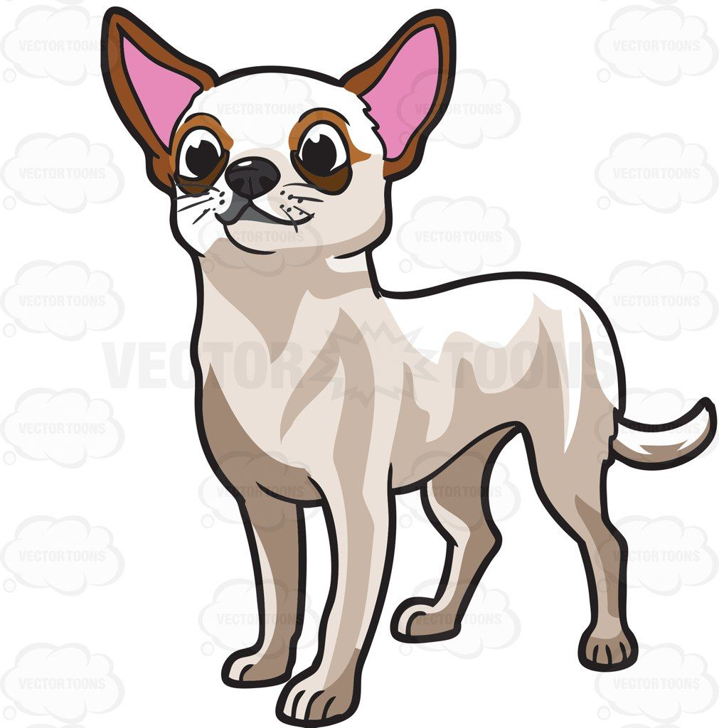 1011x1024 A Very Cute Chihuahua Adorable Animals, Dog And Dog Breeds