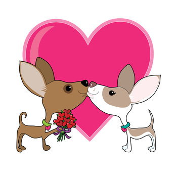 346x346 Two Valentine Chihuahua Dogs