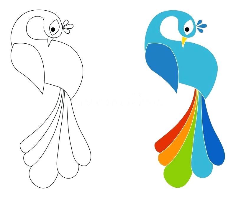 800x671 Peacock Coloring Page Peacock Coloring Pages Sdvoterprotection