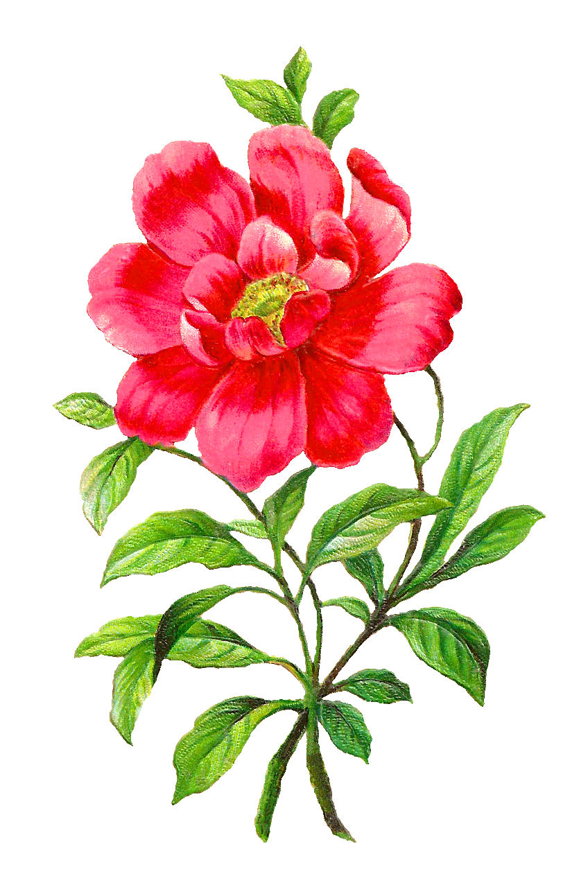 Chinese Flower Clipart