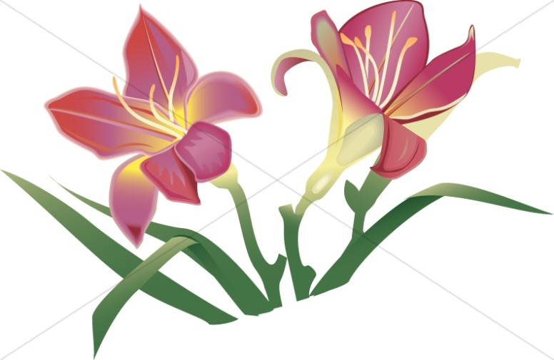 776x505 Easter Lillies In Pink Church Flower Clipart