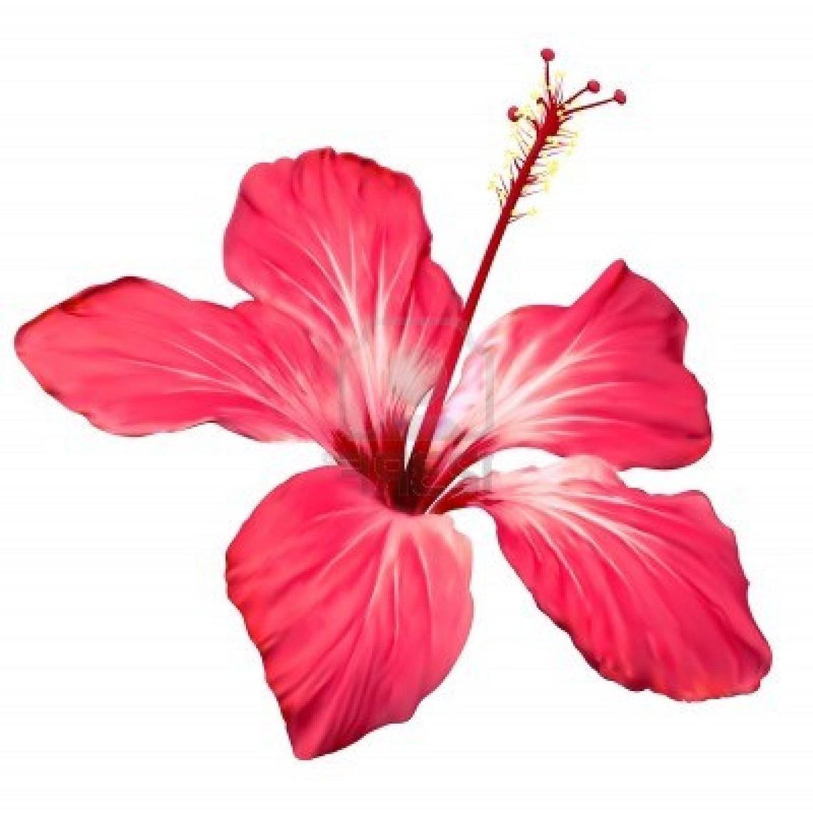 1140x1140 Hawaiian Flower Clipart Free