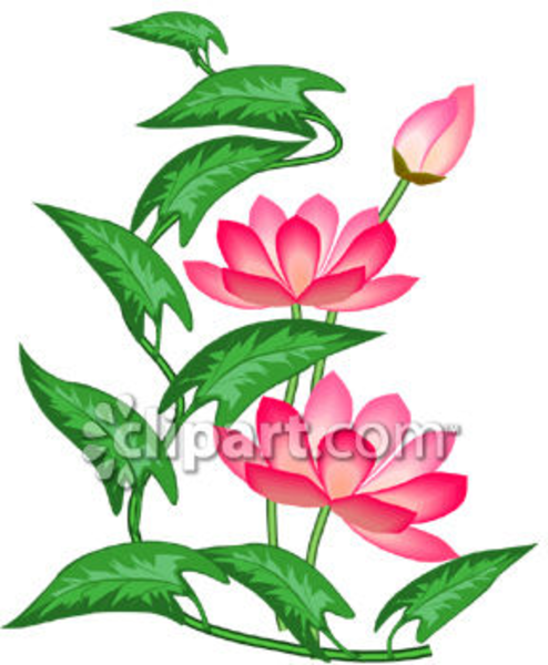 494x600 Pink Lotus Flowers Clipart Image Free Images