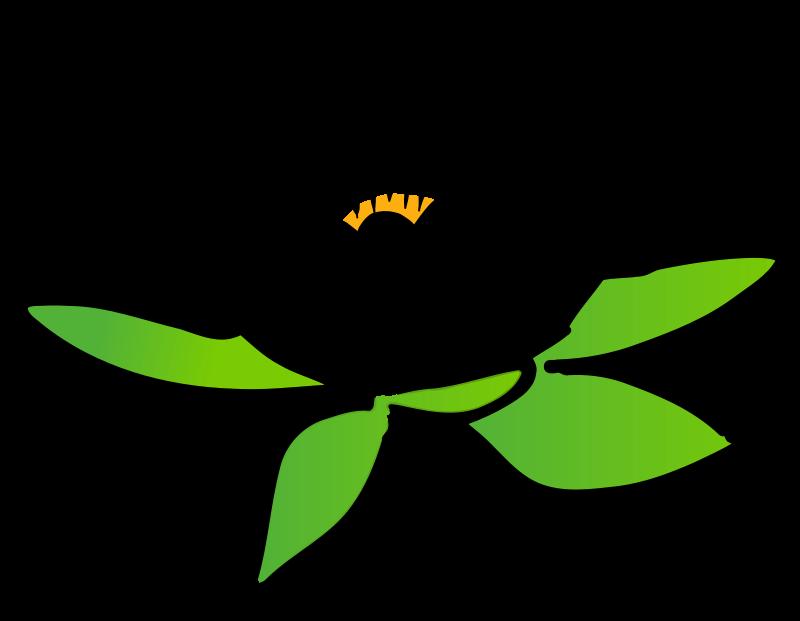 800x621 Vector Lotus Flower Flowers Lotus, Lotus Flower