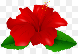 260x180 China Rose Png And Psd Free Download