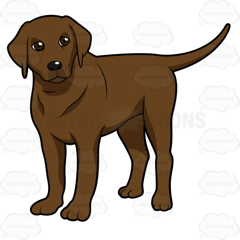 Chocolate Lab Clipart