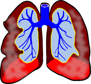 300x275 Image Of Circulatory System Clipart