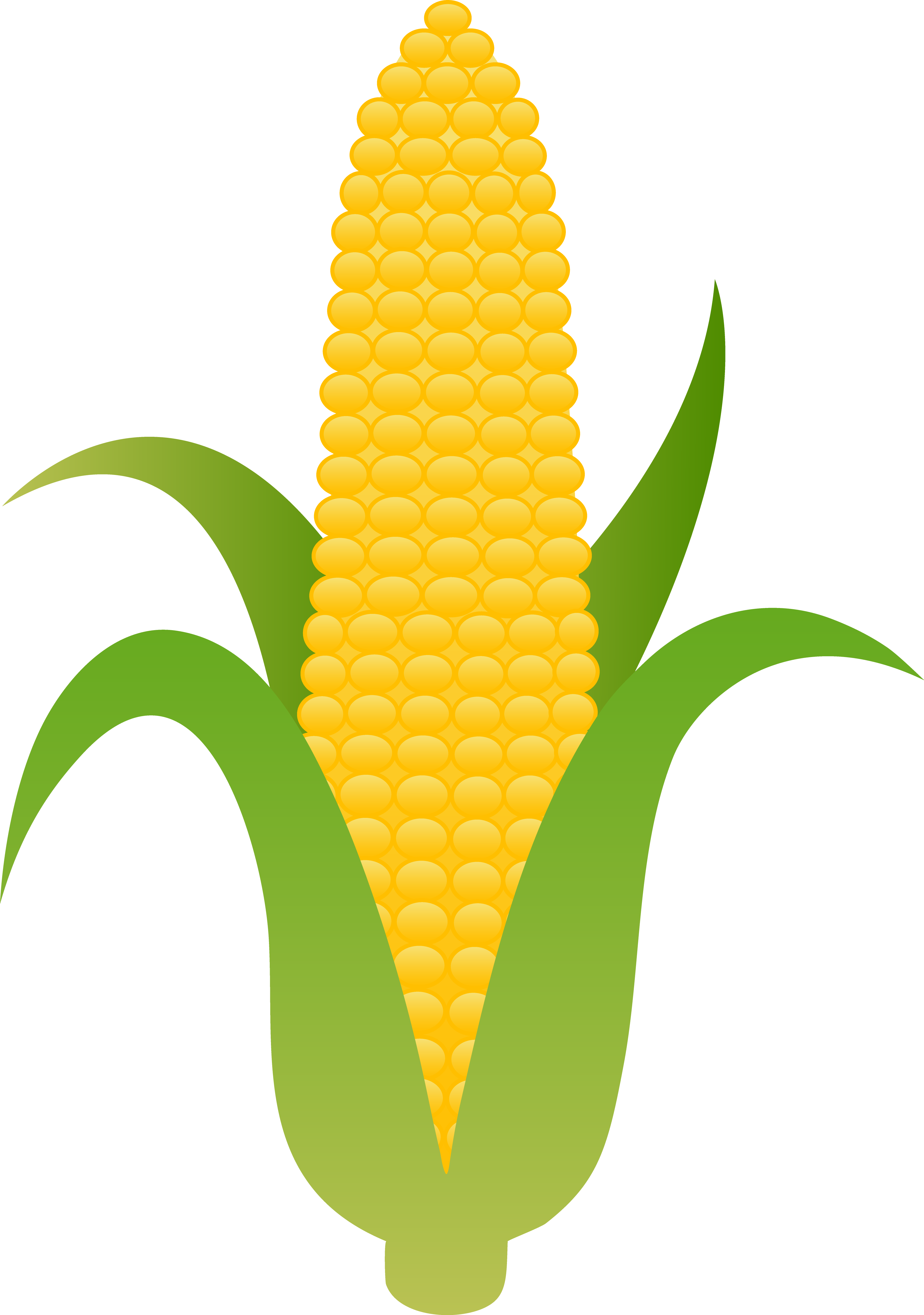 3751x5338 Wallpaper And Desktop For Pc Ear Of Yellow Corn Free Clip Art
