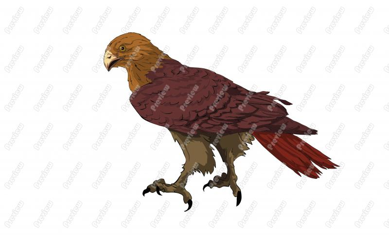 800x485 Red Tailed Hawk Character Clip Art