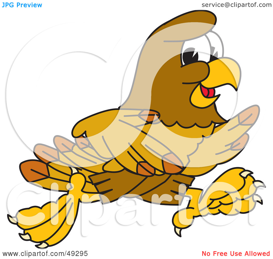 1080x1024 Red Tailed Hawk Clipart Clipart Panda
