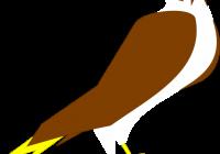 200x140 Falcon Clipart Peregrine Falcon Falco Peregrinus Duck Hawk Clip