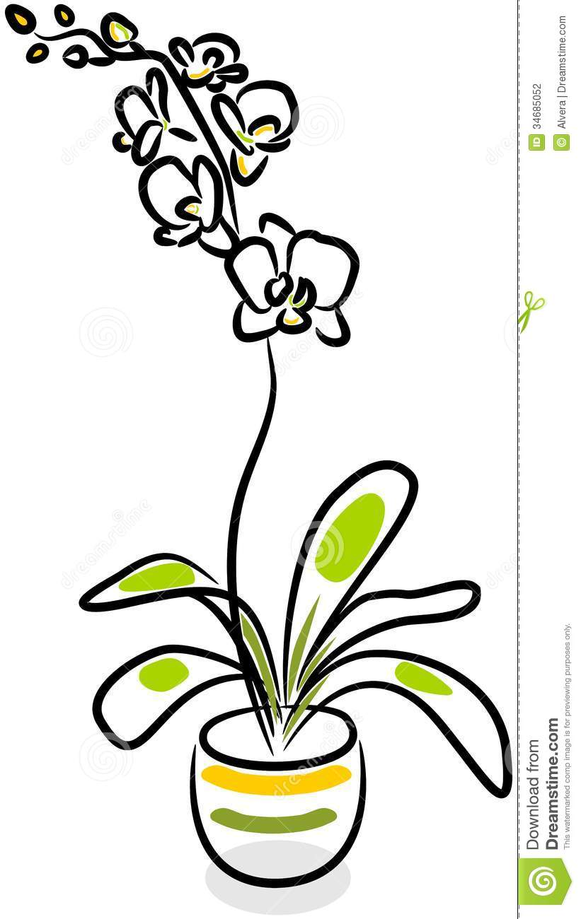 821x1300 Gousicteco Orchid Clipart Black And White Images