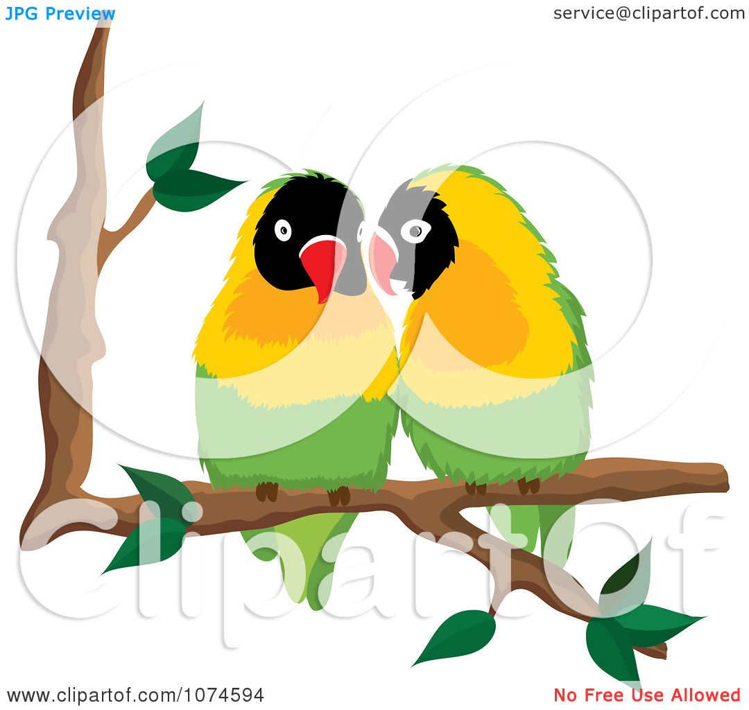 1080x1024 Clipart Two Love Birds Perched On A Branch 1