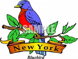 300x229 The State Bird Of New York