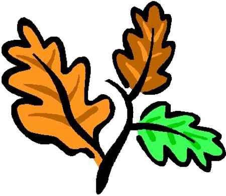 450x389 Best Oak Leaf Clipart Free Oak
