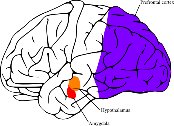 600x434 Brains Clipart Brain Overload