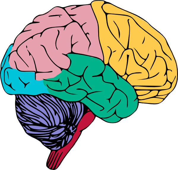 600x576 Free To Use Amp Public Domain Brain Clip Art Brainy Matter Images