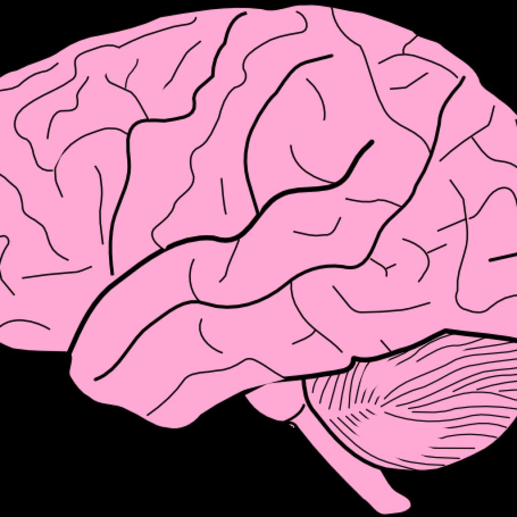 1024x1024 Brain Clipart Fall Clipart