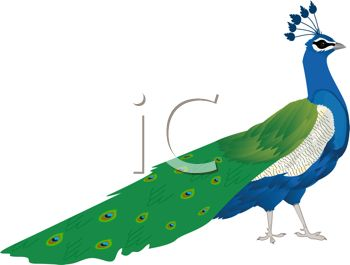 350x265 Cartoon Clip Art Of A Peacock With His Feathers Down