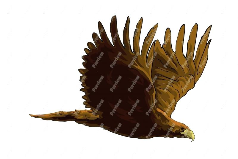 800x536 Golden Eagle Clip Art Soaring Eagle Clip Art Library Golden Eagle