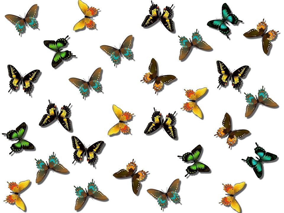 960x720 Flowers And Butterflies Clipart