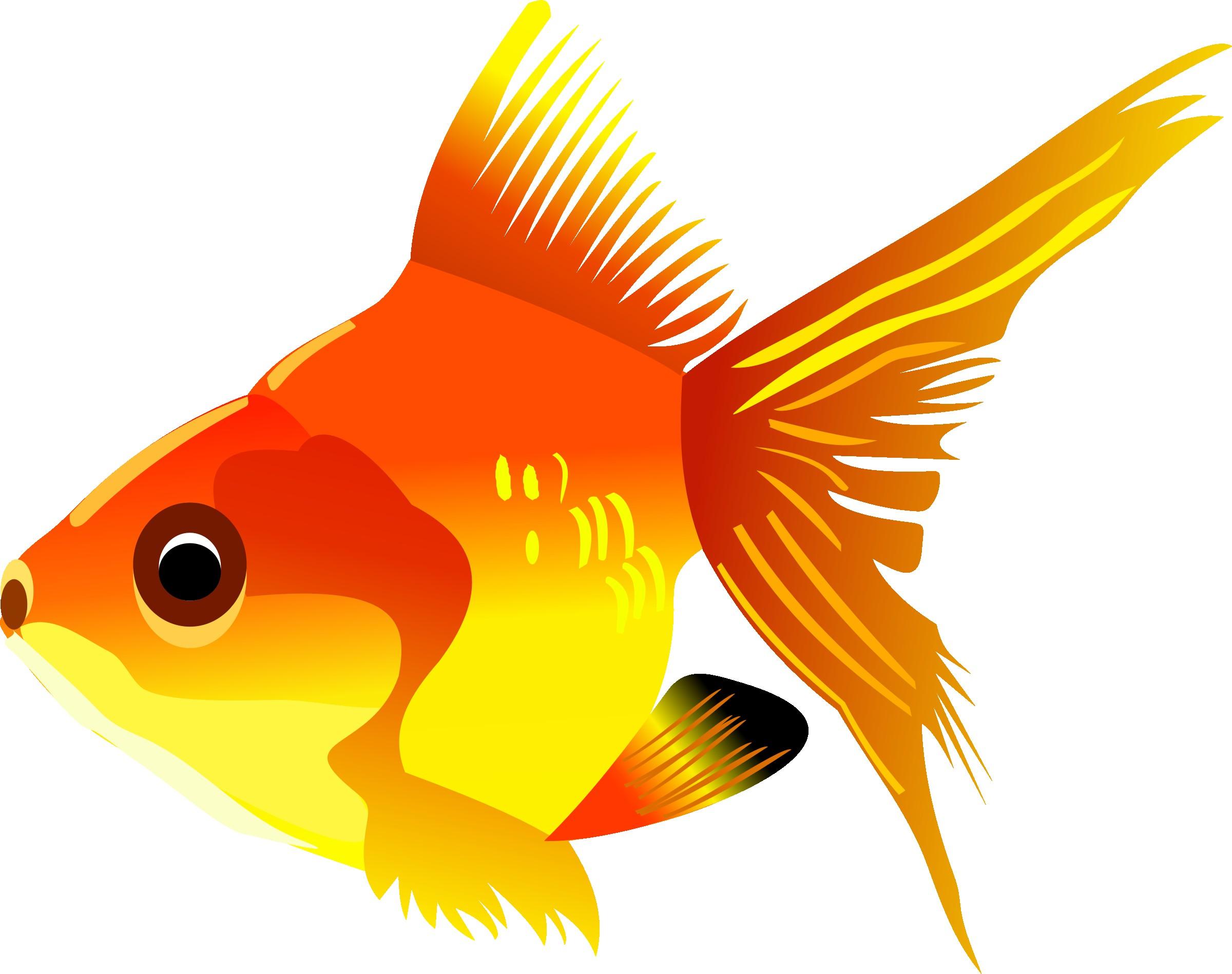 2400x1898 Goldfish Transparent Png Clip Art Image Gallery Yopriceville