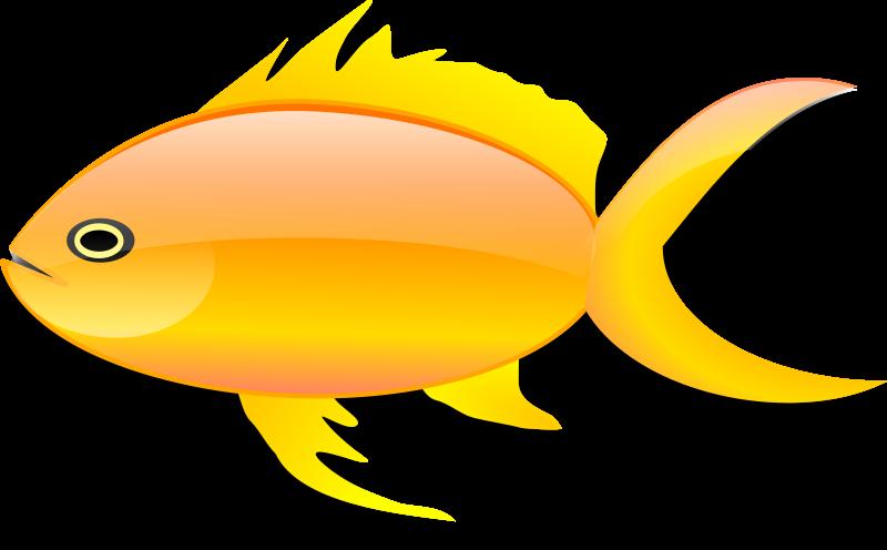 800x496 Free Goldfish Clipart Goldfish Clipart Clipart Panda Free Clipart