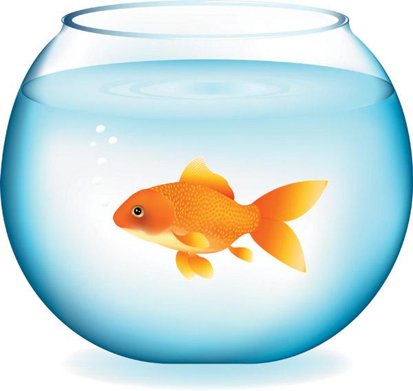600x569 Goldfish Clipart Goldfish Clipart Clip Art For Students