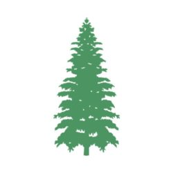 250x250 18best Of Pine Tree Clip Art