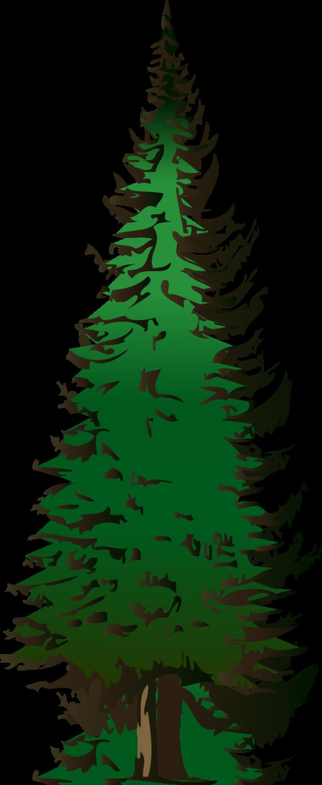 640x1560 Web Design Amp Development Evergreen Trees, Clip Art And Blogging
