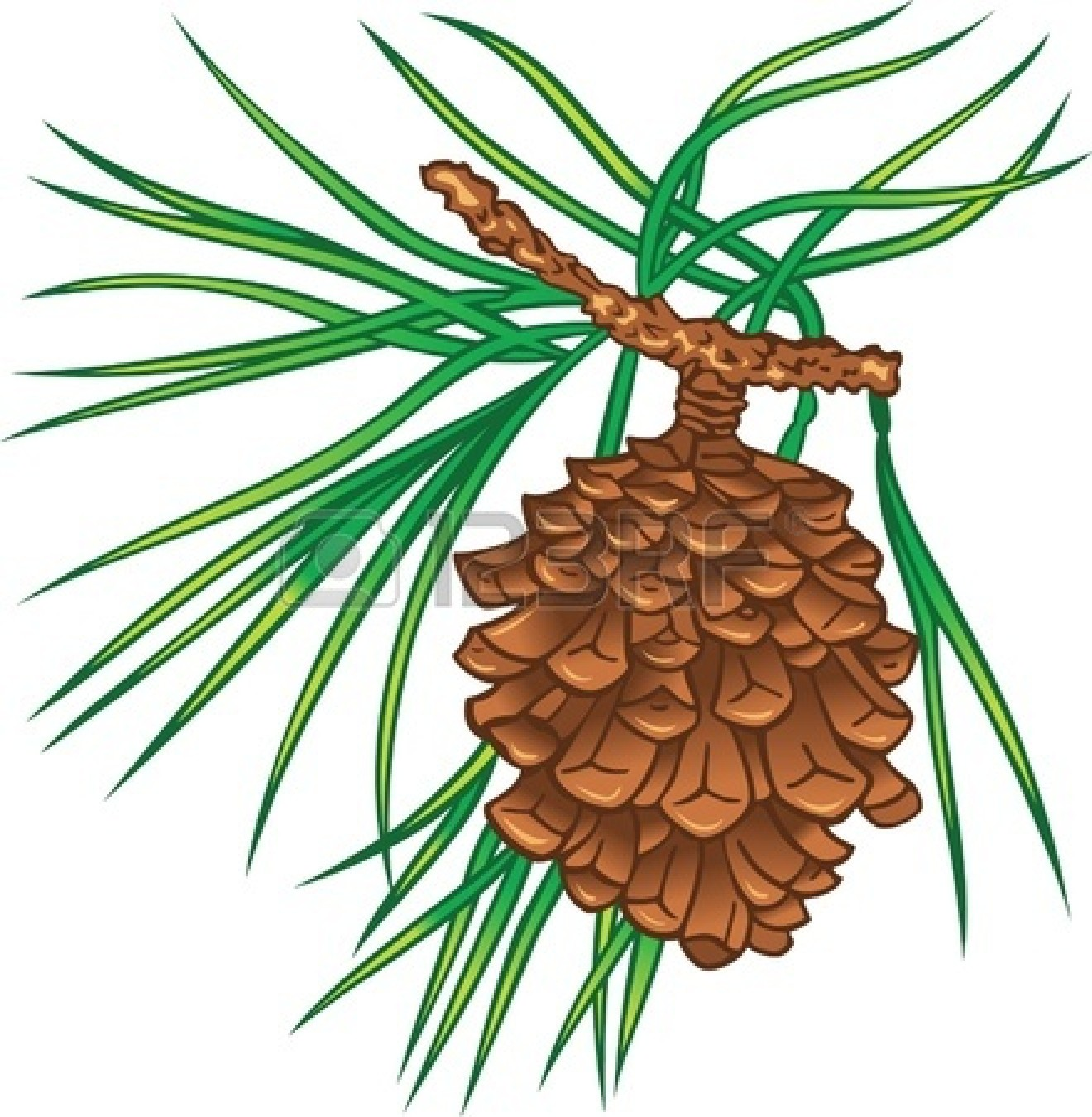 1320x1350 Branch Clipart Pine Tree