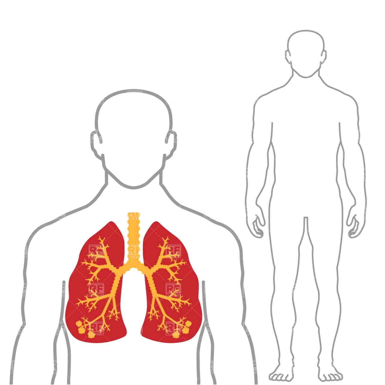 1280x1280 Spleen Clipart Human Body Outline Clip Art 544f3e0b043c2
