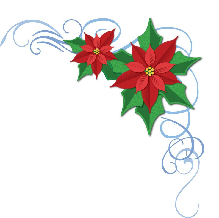 736x734 Poinsettia Clipart Flower Vase Free Collection Download