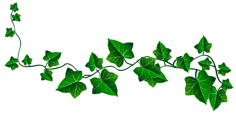 4960x2377 Vine Ivy Decoration Png Clipart Pictureu200b Gallery Yopriceville