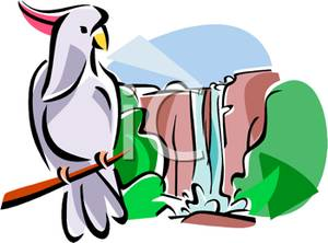 300x222 Royalty Free Clipart Image Cockatoo On Branch In Front